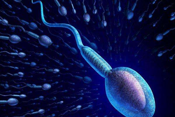 tinh trùng sống