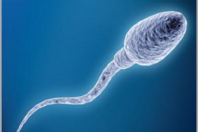 Tinh trùng sống được bao lâu trong cơ thể người phụ nữ
