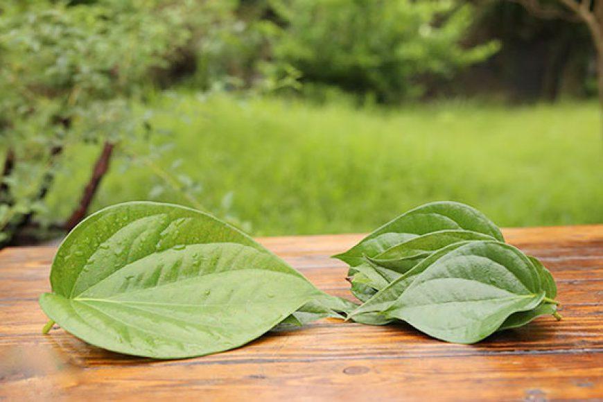 Hướng dẫn xông lá trầu không chữa bệnh phụ khoa – hết ngứa ngay